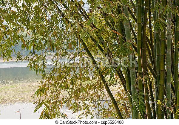 bamboo trees - csp5526408