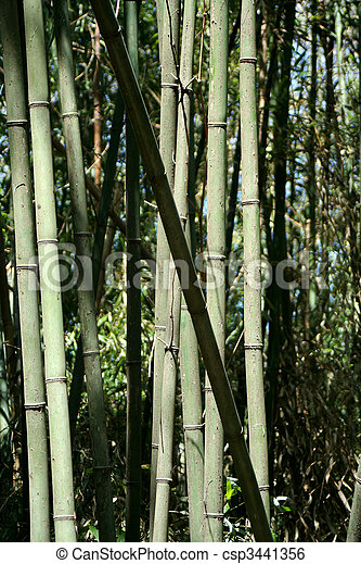 Bamboo trees - csp3441356