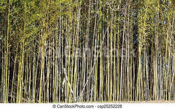 Bamboo Trees - csp25252228