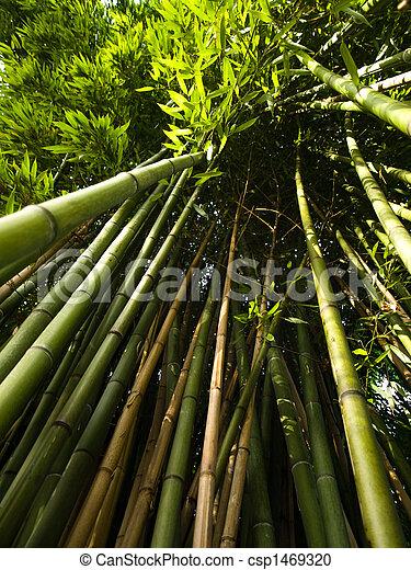 Bamboo trees - csp1469320