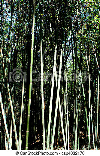 Bamboo trees - csp4032170