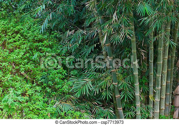 bamboo trees - csp7713973