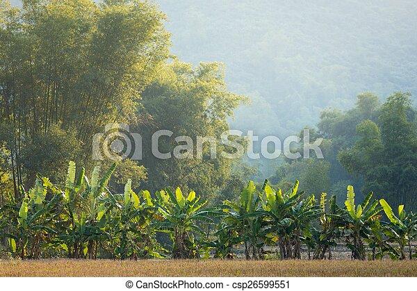 bambou, banane, arbres - csp26599551