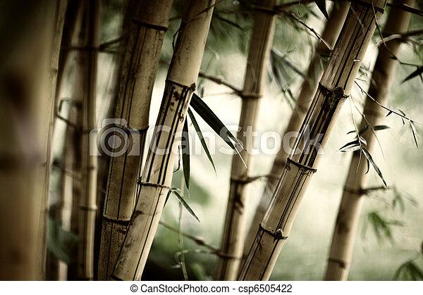 bambou, fond - csp6505422