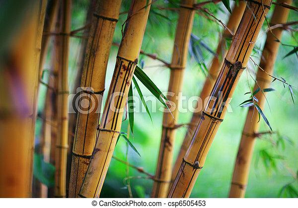 bambou, fond - csp6505453