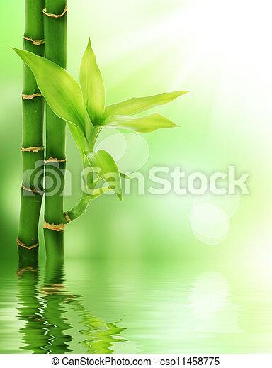 bambou - csp11458775