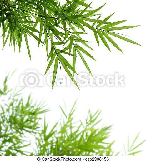bambu, folhas - csp2308456
