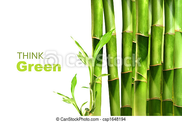 Bambus schießt Seite an Seite - csp1648194