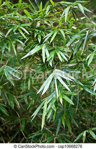 Bambus Pflanze In China