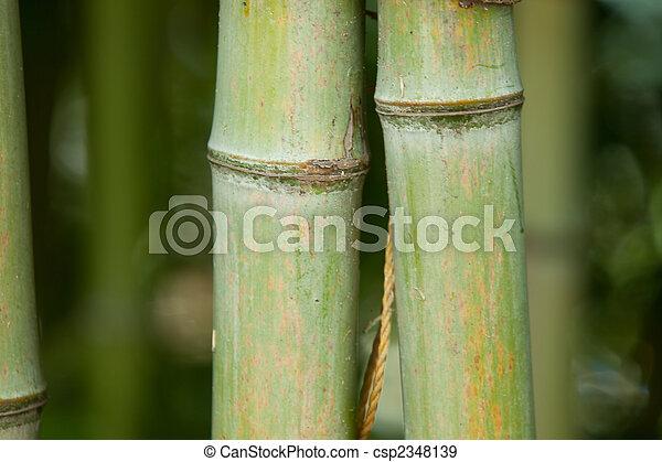 Bambus Natur