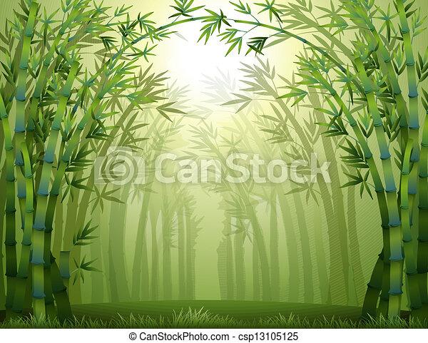 bambus, zielony las - csp13105125