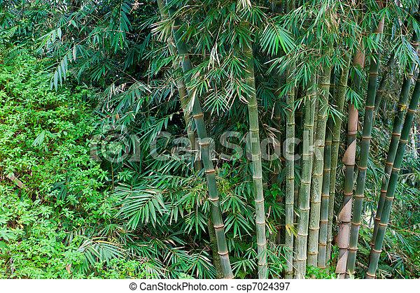 bambusowe drzewa - csp7024397