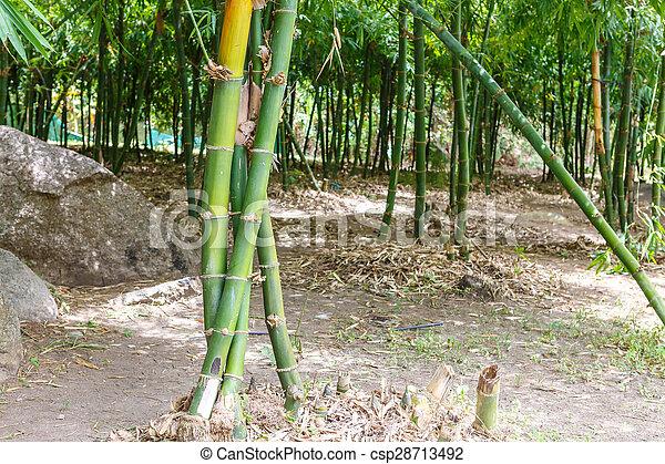bambusowe drzewa - csp28713492