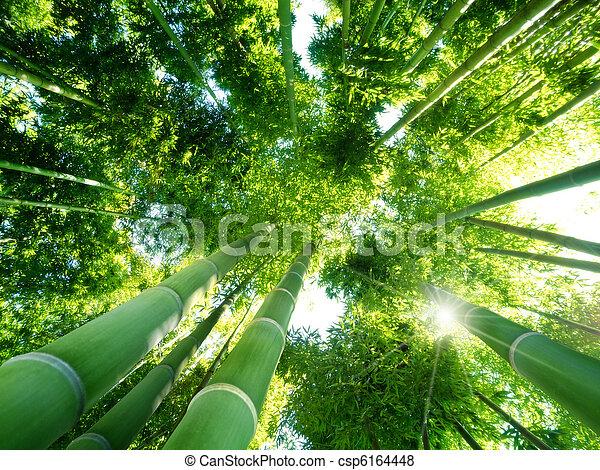 bambusz erdő - csp6164448