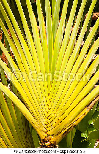 Banana fan leaves line. - csp12928195