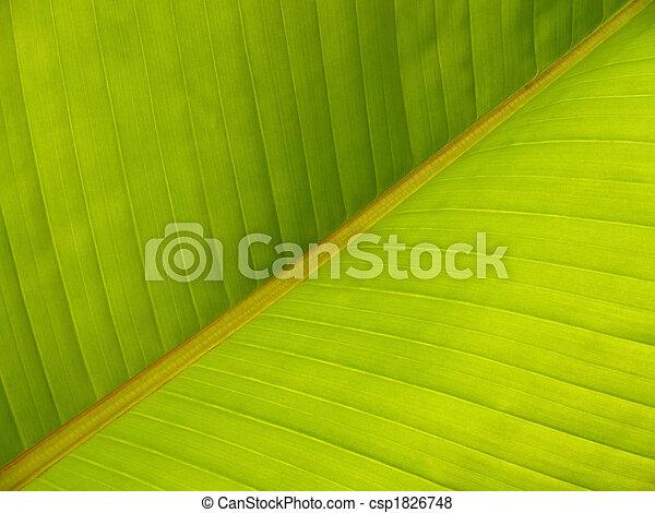Banana Leaf Diagonal Pattern Close-up - csp1826748