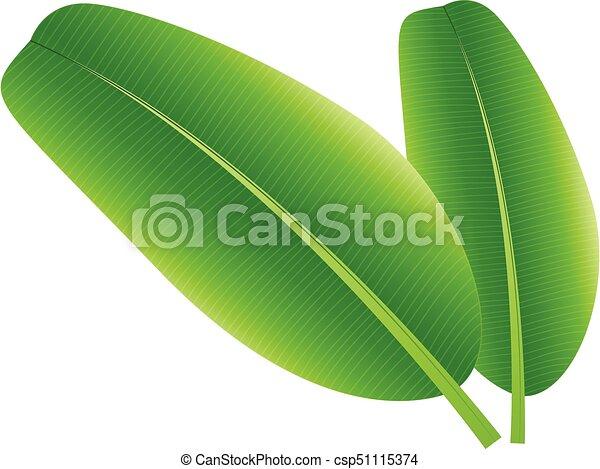 Banana Leaf Bananaisolatedvector Illustration Vectors