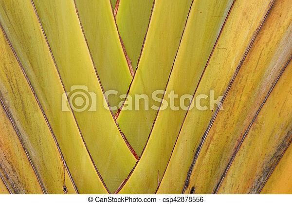 banana leaves branch - csp42878556