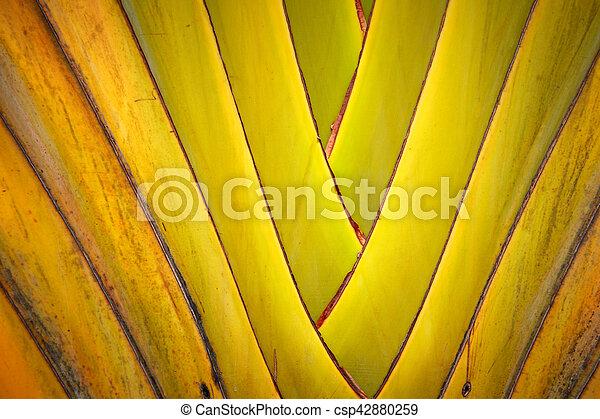 banana leaves branch - csp42880259