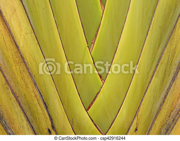 banana leaves branch - csp42916244