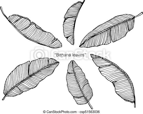 Banana Leaves Drawing
