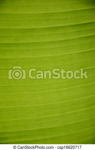 Banana leaves. - csp16620717