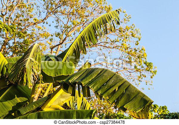 Banana leaves - csp27384478