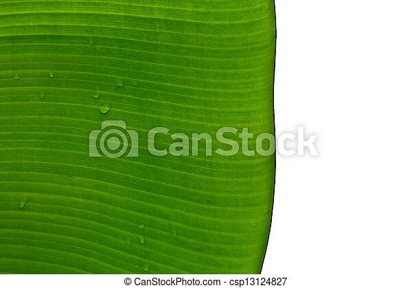 Banana leaves. - csp13124827