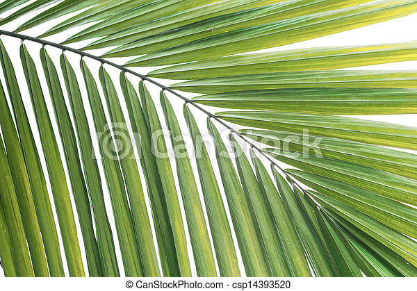 banana leaves - csp14393520