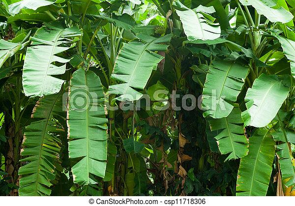 Banana leaves. - csp11718306