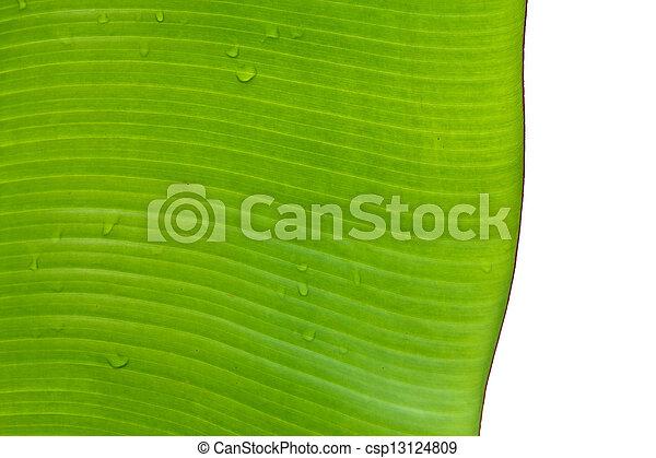 Banana leaves. - csp13124809