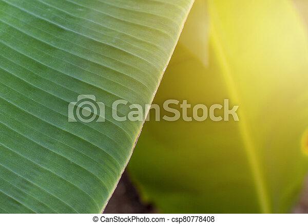 Banana leaves. - csp80778408