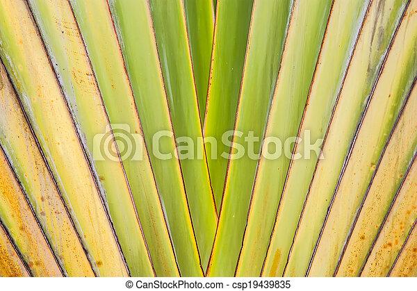 banana leaves - csp19439835