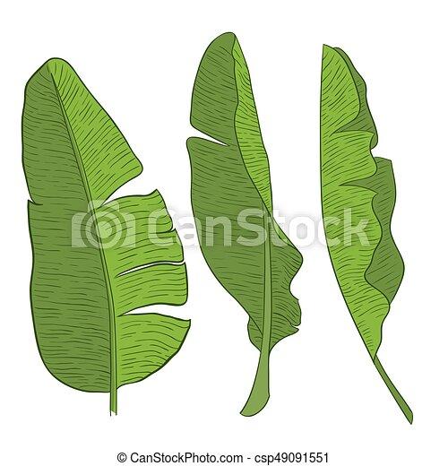 Banana Leaves Vector Green Clipart