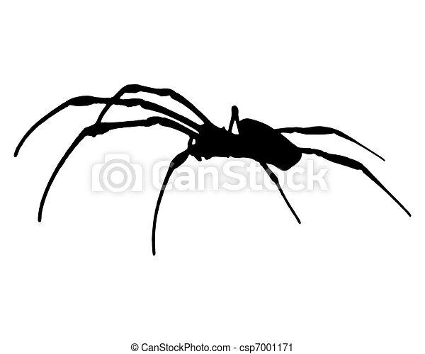 Banana spider - csp7001171