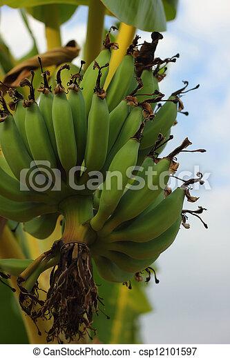 Banana - csp12101597