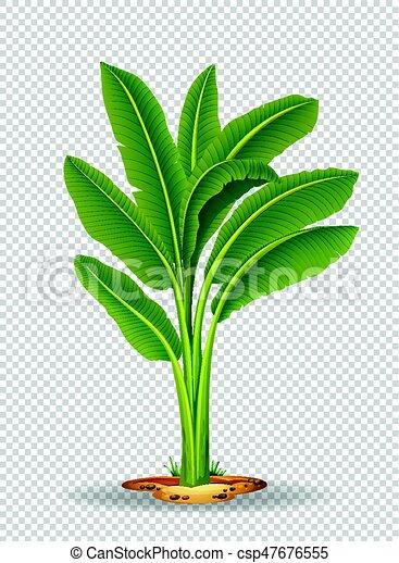Banana Tree On Transparent Background Illustration