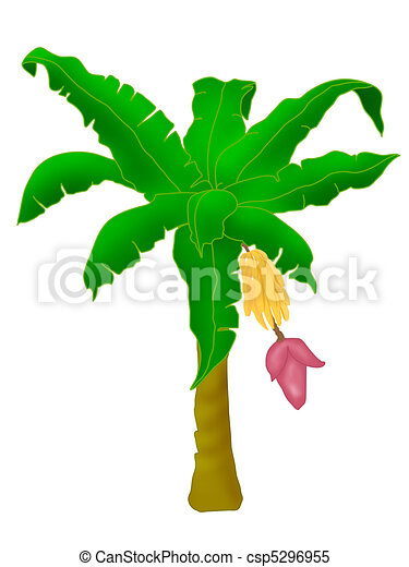 plants banana tree stock illustrations search clipart drawings rh canstockphoto com banana tree clipart