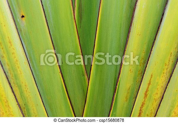 Banana tree texture - csp15680878