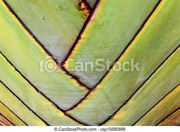 Banana tree texture - csp15680888
