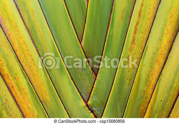 Banana tree texture - csp15680856