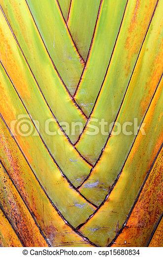 Banana tree texture - csp15680834