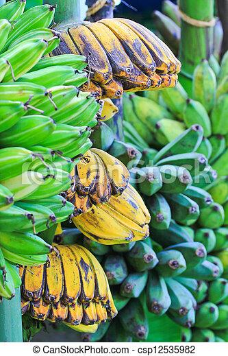 Bananas - csp12535982