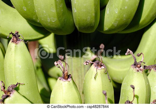 Bananas - csp48287844