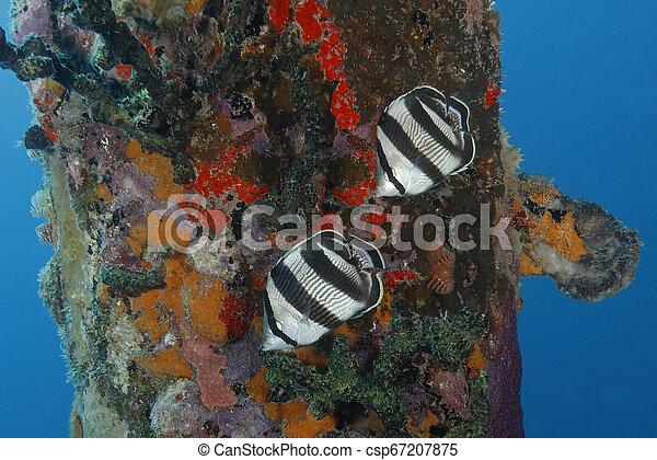 Un par de Mariposas al lado de un muelle - csp67207875