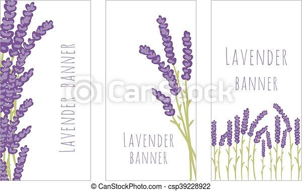 baner, sätta, tre, lavendel - csp39228922