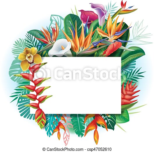 banner against a background of tropical flowers and leaves vector rh canstockphoto com  tropical flower clipart vector