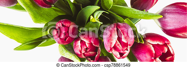 Banner with red tulips on a white background - csp78861549