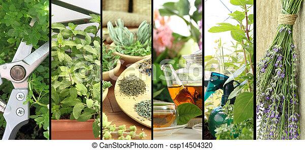 Banners of fresh herbs on balcony garden - csp14504320