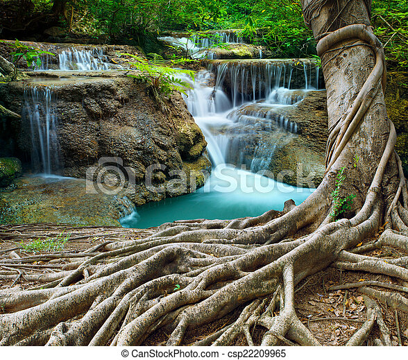 banyan tree and limestone waterfalls in purity deep forest use n - csp22209965